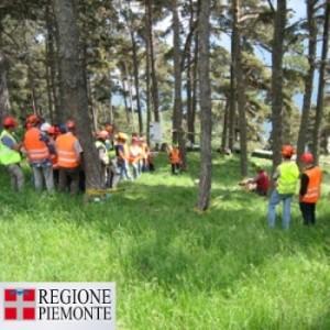 sicurezza lavoro nei cantieri forestali